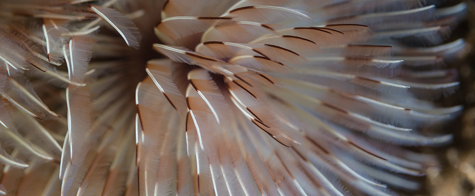 Underwater photography with Arno Enzerink - tube worm
